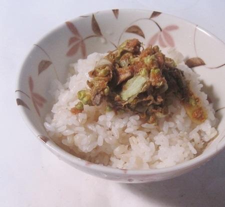フキノトウ0215―2.JPG